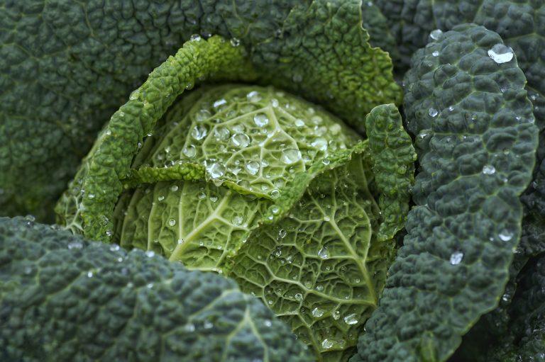 Comer verduras. La col.